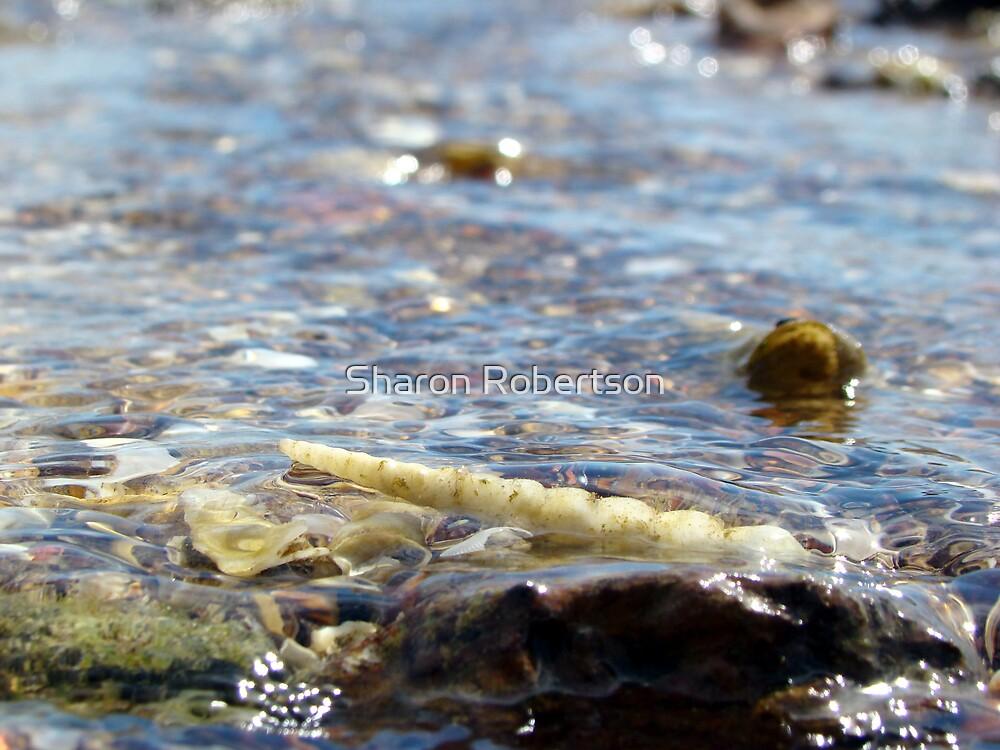 Shell Swimming by Sharon Robertson