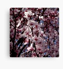 Pink Prunus Blossom Highgate  Canvas Print