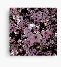 Pink Prunus Blossom Love  Canvas Print