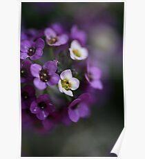 Flower Ball Poster