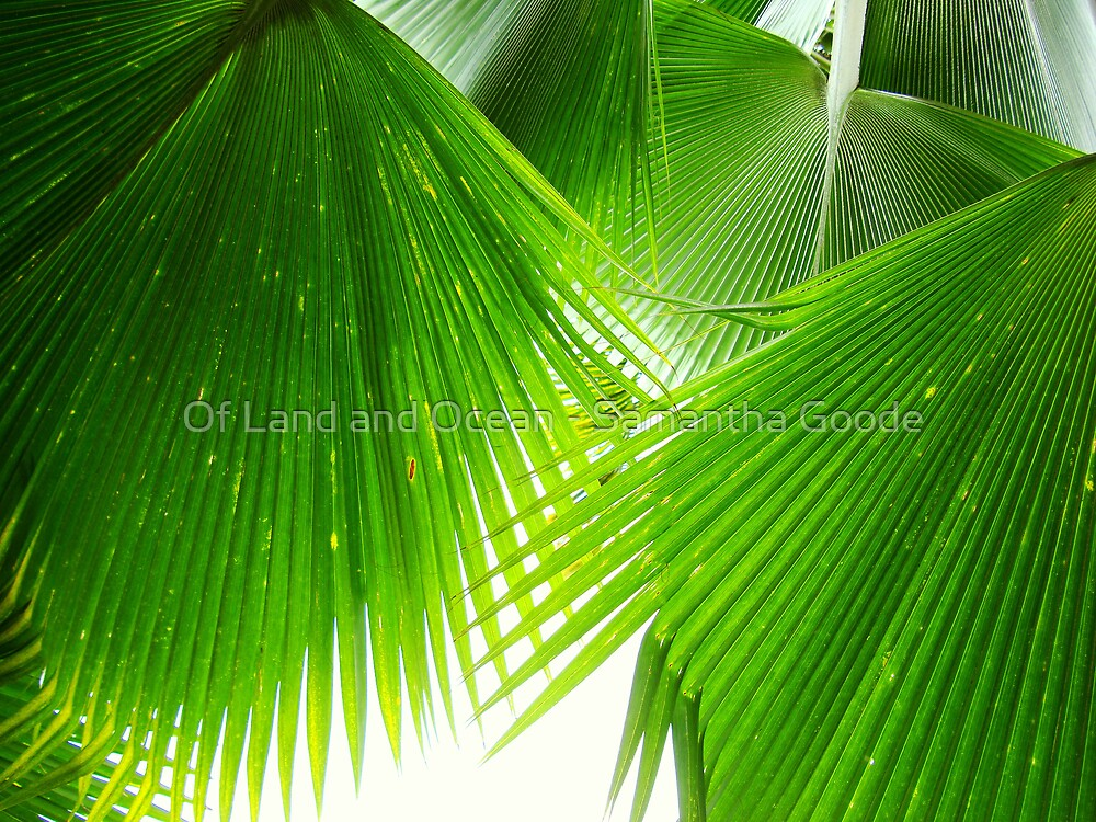 Palm Leaves, Fiji (taken lying underneath the tree looking directly upwards). by Of Land & Ocean - Samantha Goode