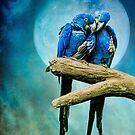 My Blue Heaven by Brian Tarr