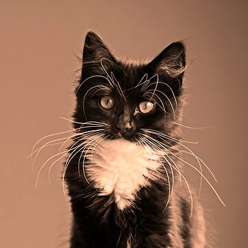 Jess the kitten by DerekCorner