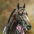 A Racehorse called Venue by Brian Tarr