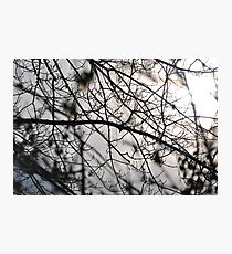 A tree branch after the storm Photographic Print