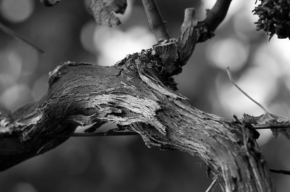 Vines by Glenn Barnett