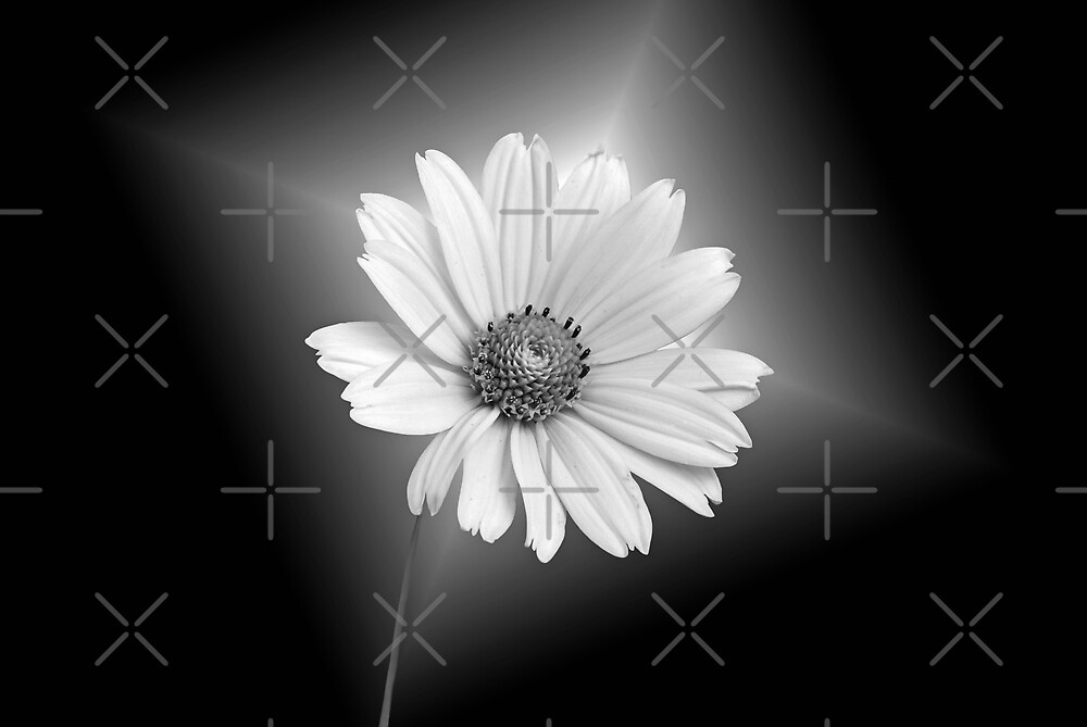 Fragility by Maria Dryfhout