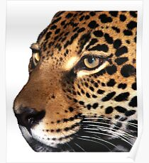 Beautiful Leopard Poster
