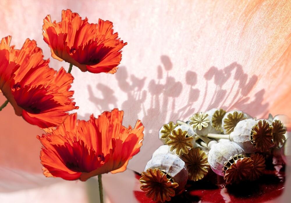 Red Poppy by simplydesignart