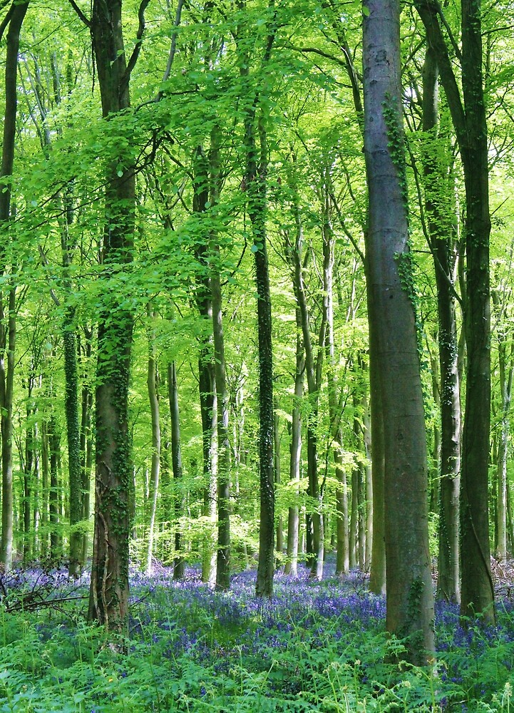 Bluebell Woods by Megan Howdle