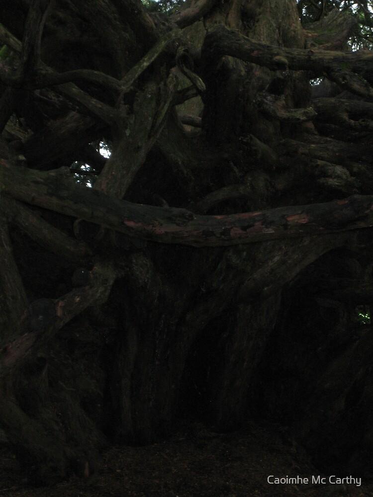 Crum Yew 3 by Caoimhe Mc Carthy