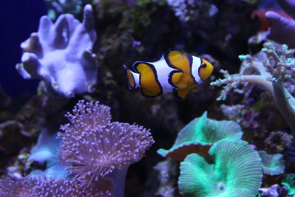 Clown Fish by MrsWindy
