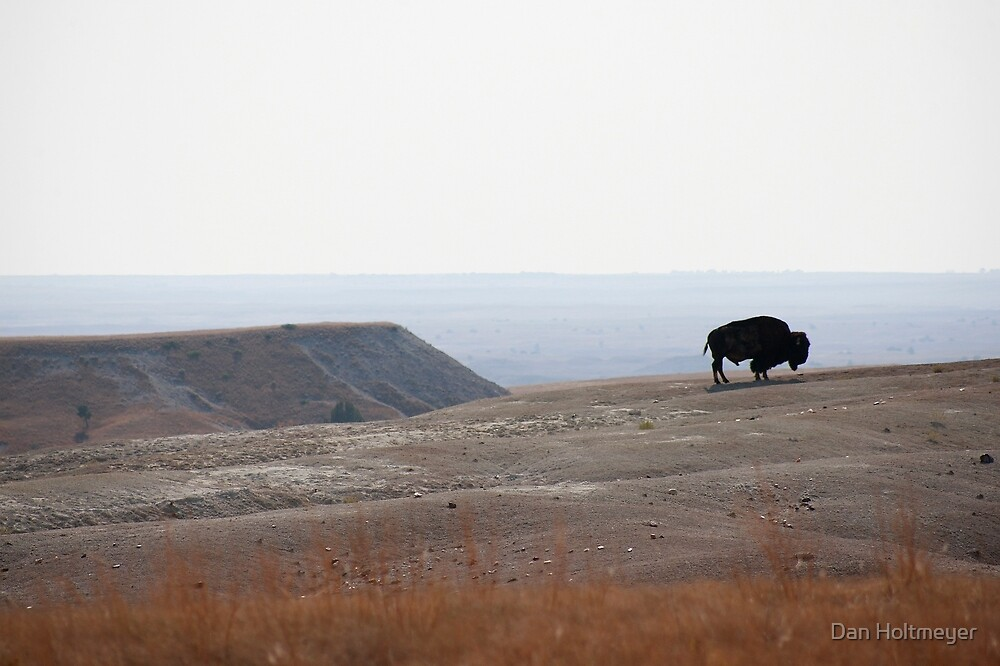 Bison Alone by Dan Holtmeyer