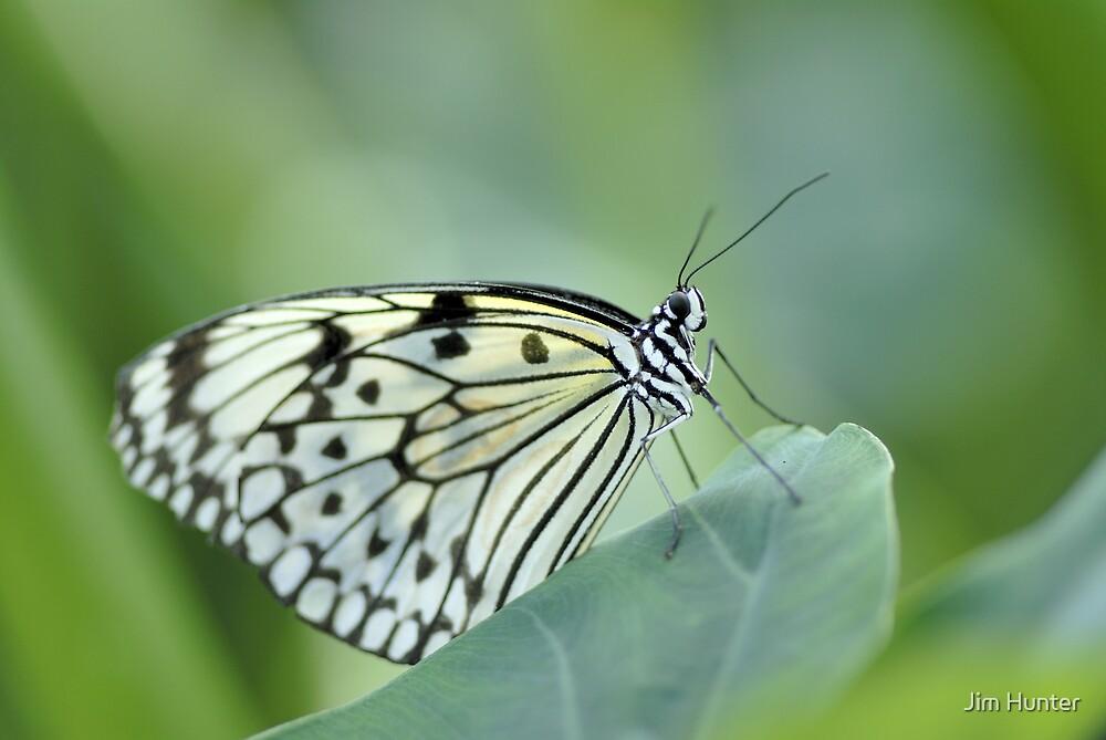 Butterfly by Jim Hunter