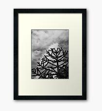 Monkey Puzzle Framed Print