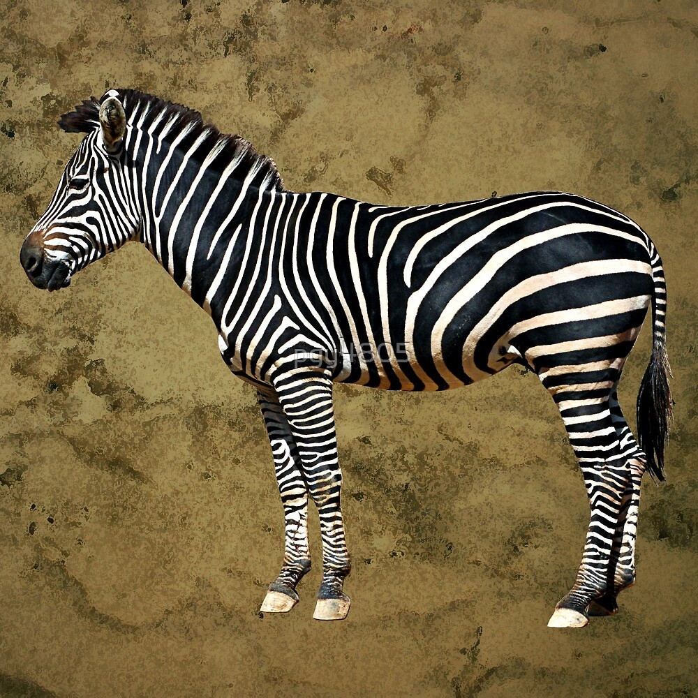 Zebra by pgy4805