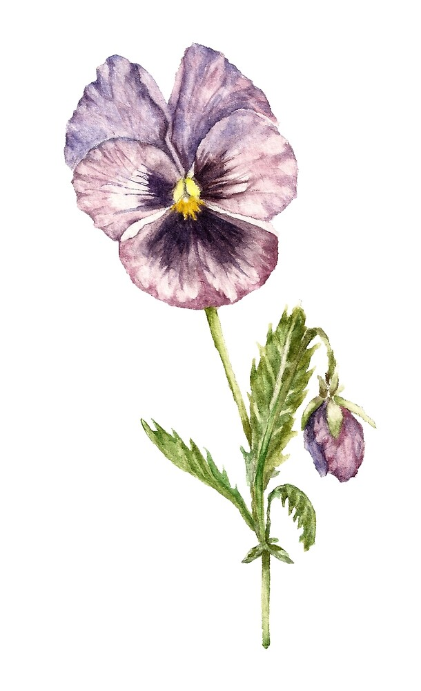 Watercolor Pansy by Goosi