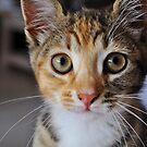 Bat-eared baby-cat by Karen01