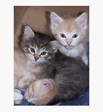 Kittens Photographic Print