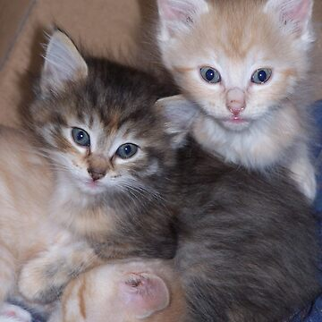 Kittens by Muse