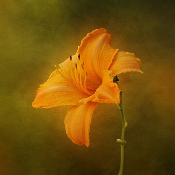 Orange Daylily by SandyK