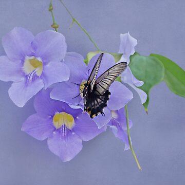 Butterfly Fluttering by SandyK