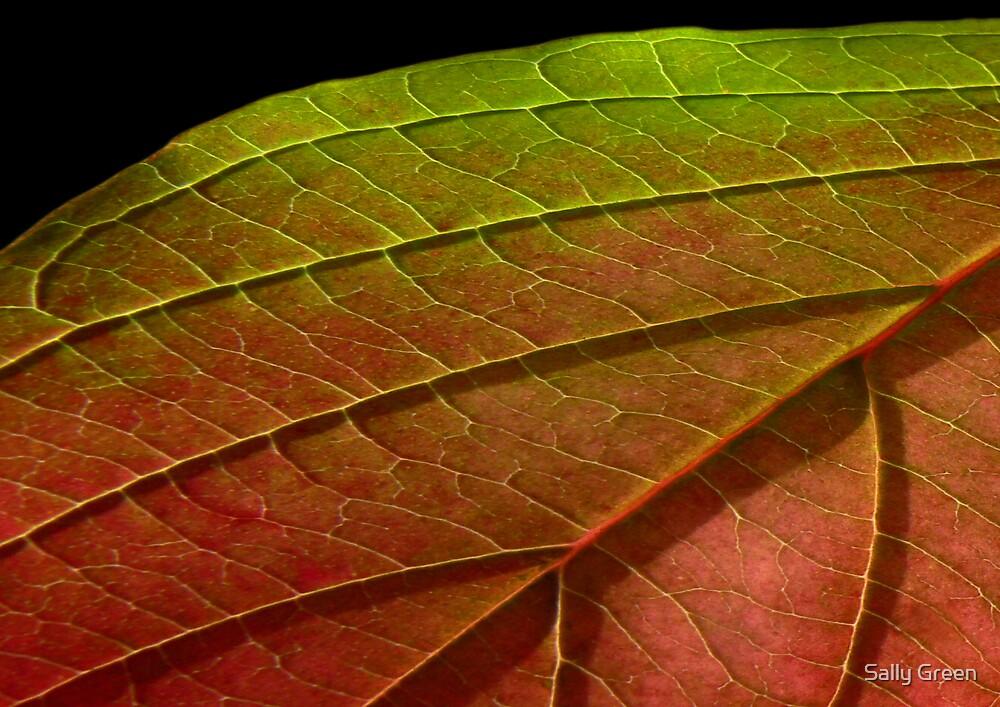 Leaf No4 by Sally Green