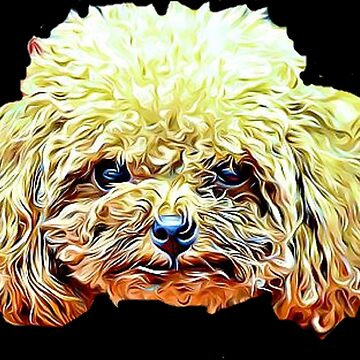 Toy Poodle by ritmoboxers