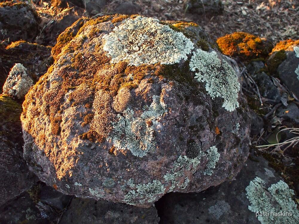 Moss Rock by patti haskins