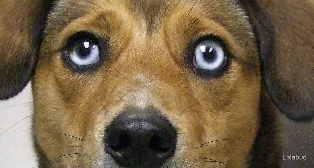 Ol' Blue Eyes fresheyescomp by Lolabud