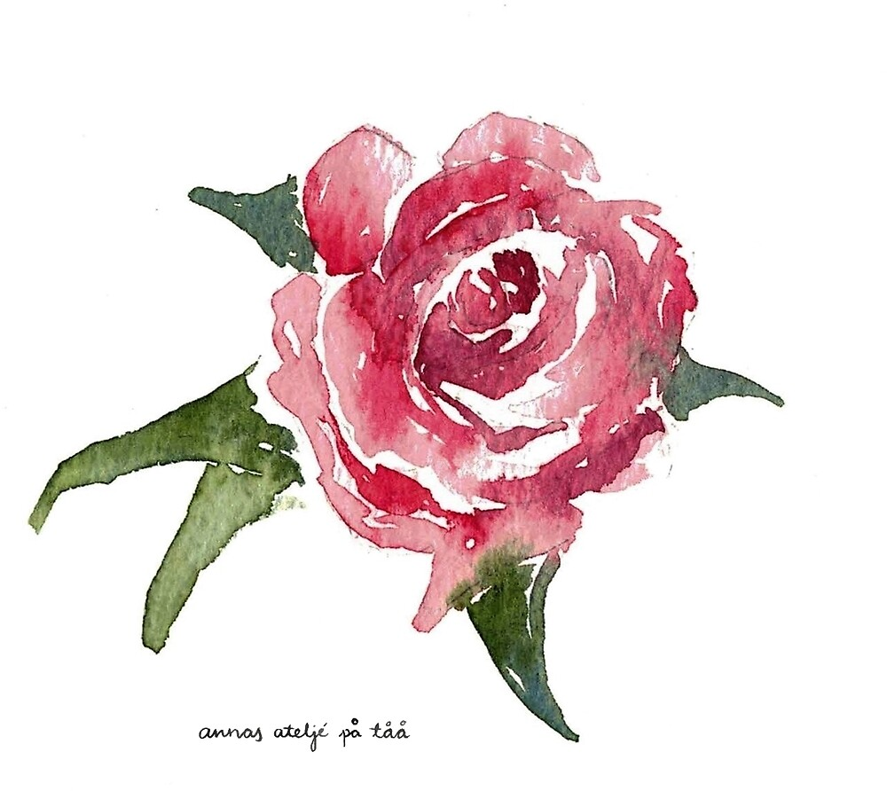 Anna's Rose Study by annahedeklint