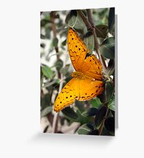 Vindula arsinoe Butterfly - Quindalup Butterfly & Fauna Park W.A. Greeting Card