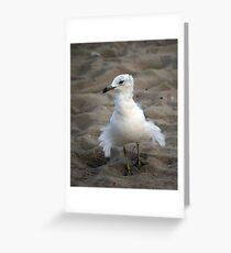"""--""""Fluff-the seagull Greeting Card"""