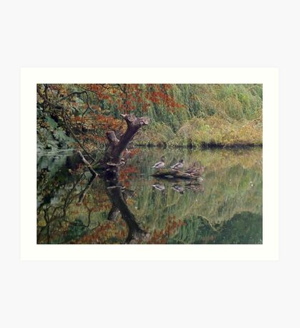 A Couple of Couples (Ducks at Witley)  Art Print