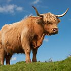 Highland Cow. Blue Skies ! Isle of Skye. Scotland. by Barbara  Jones ~ PhotosEcosse