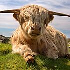 Highland Cow at  Islibhig. Isle of Lewis. Scotland. by PhotosEcosse