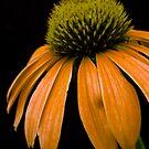 Orange Power by Pamela Hubbard