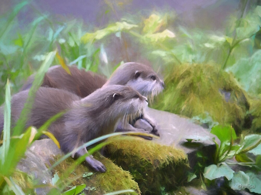 Otter Duo by shalisa