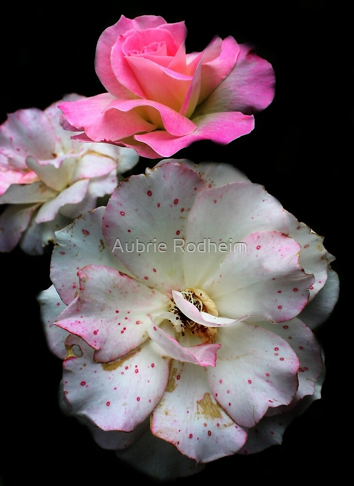 Pink Speckled Rose  by Aubrie Rodheim