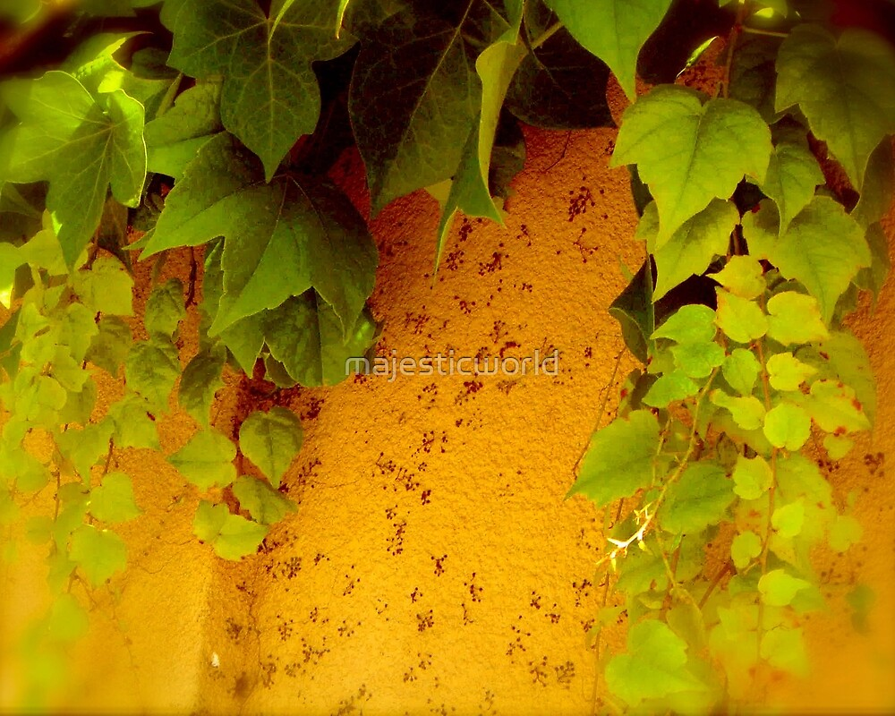 Green Fern on Red Clay - Photograph from Majestic-world.com by majesticworld