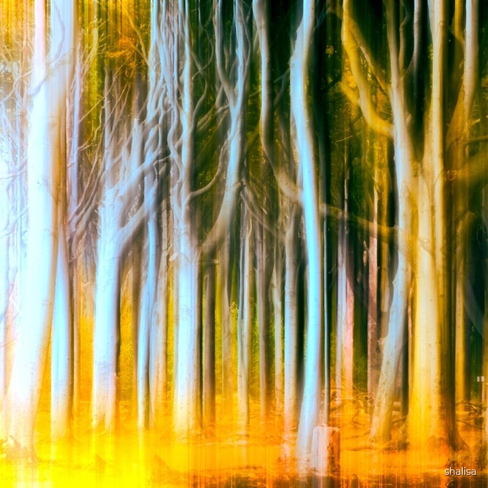 Woodland fall by shalisa
