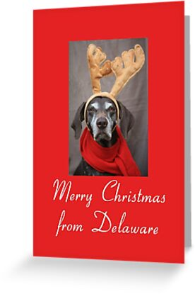 German Shorthaired Pointer Christmas from Delaware by Sabbia-Natale