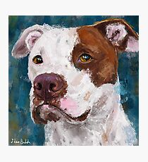 A Painting of a White and Brown Pit Bull Photographic Print