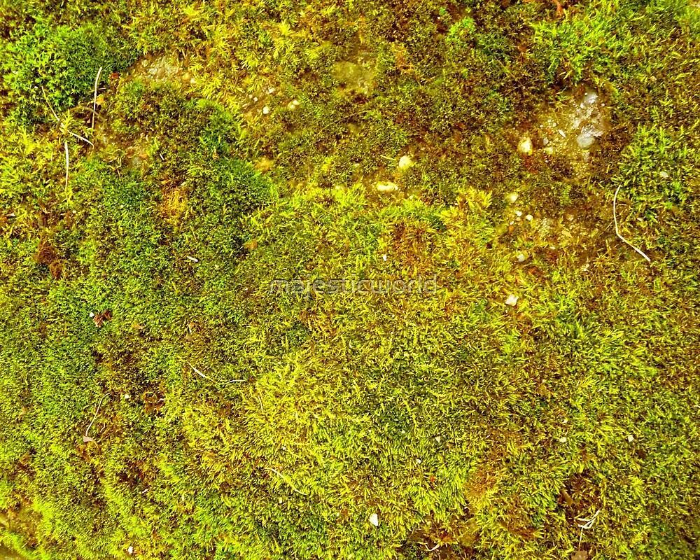 Grass - Summer Grass - Photograph by majestic-world.com by majesticworld