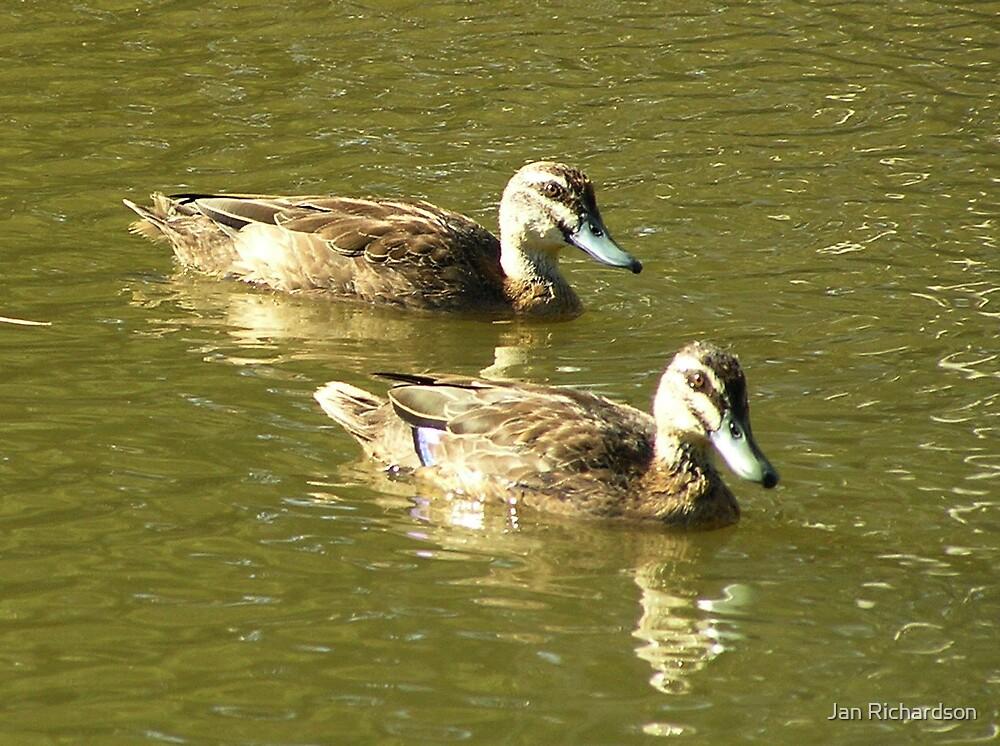 Ducks on a Dam by Jan Richardson