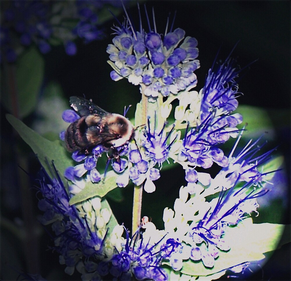 Bee on Blue by Starling