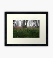 Winter daffodils Framed Print