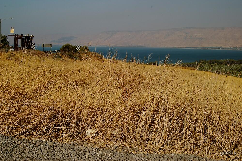 Kineret, Sea of Galilee. by gaddi s