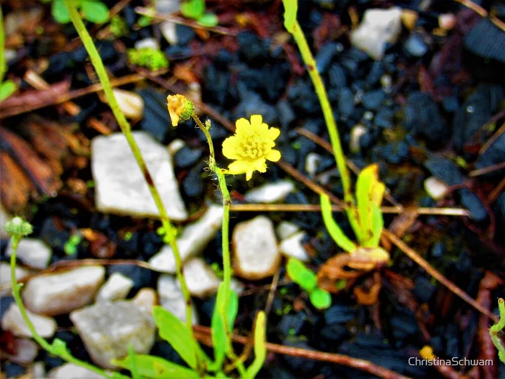 Single Flower by ChristinaSchwam