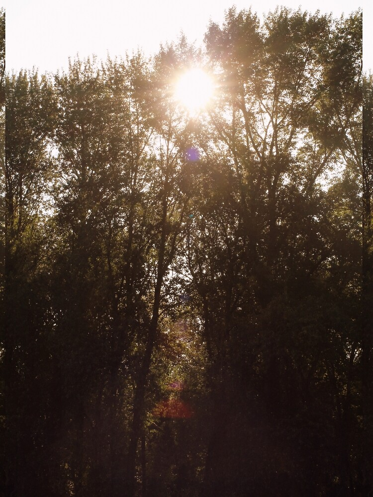morning sun through treetops Trojan pond, near Goble, Oregon by DlmtleArt